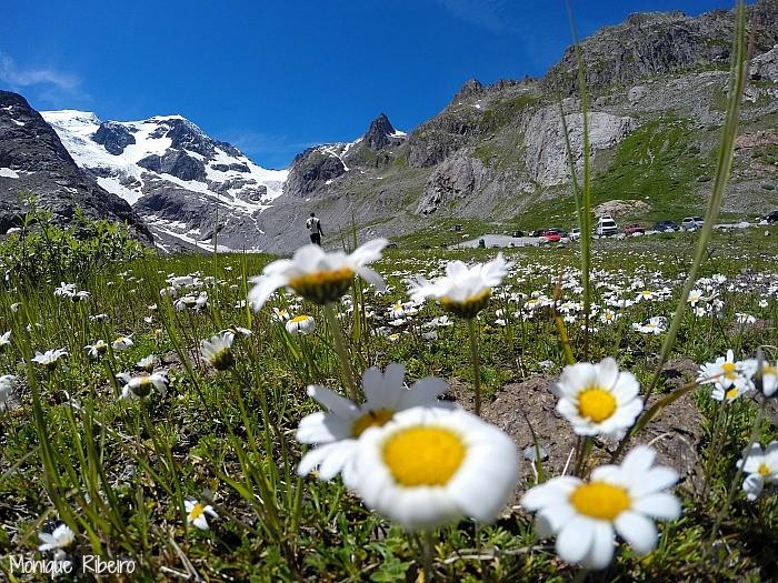 alpes suiços primavera