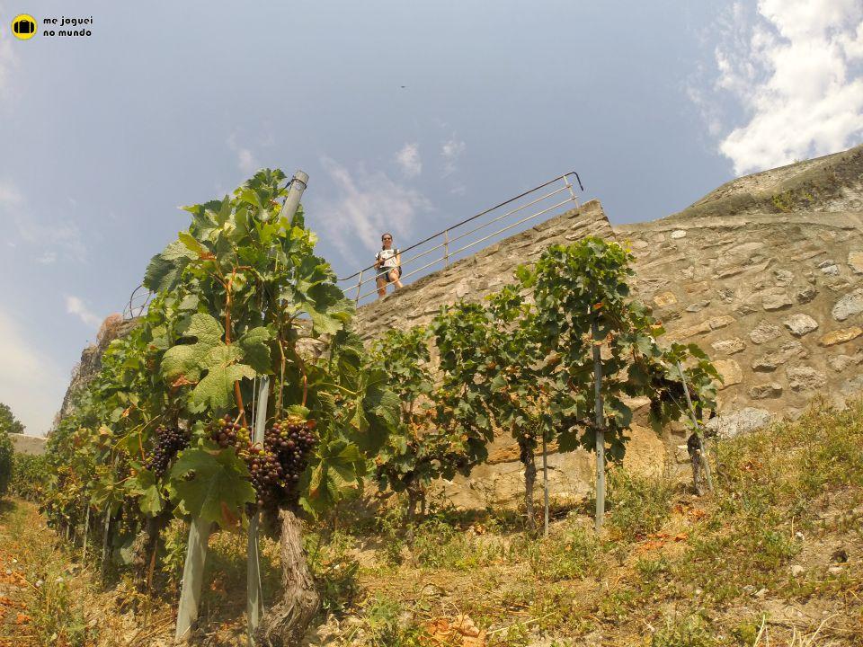 vinhedos lavaux lago genebra