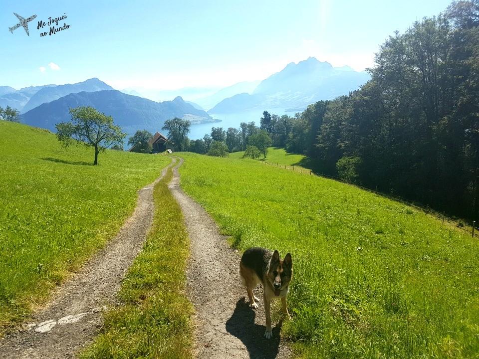 trilha montanha rigi