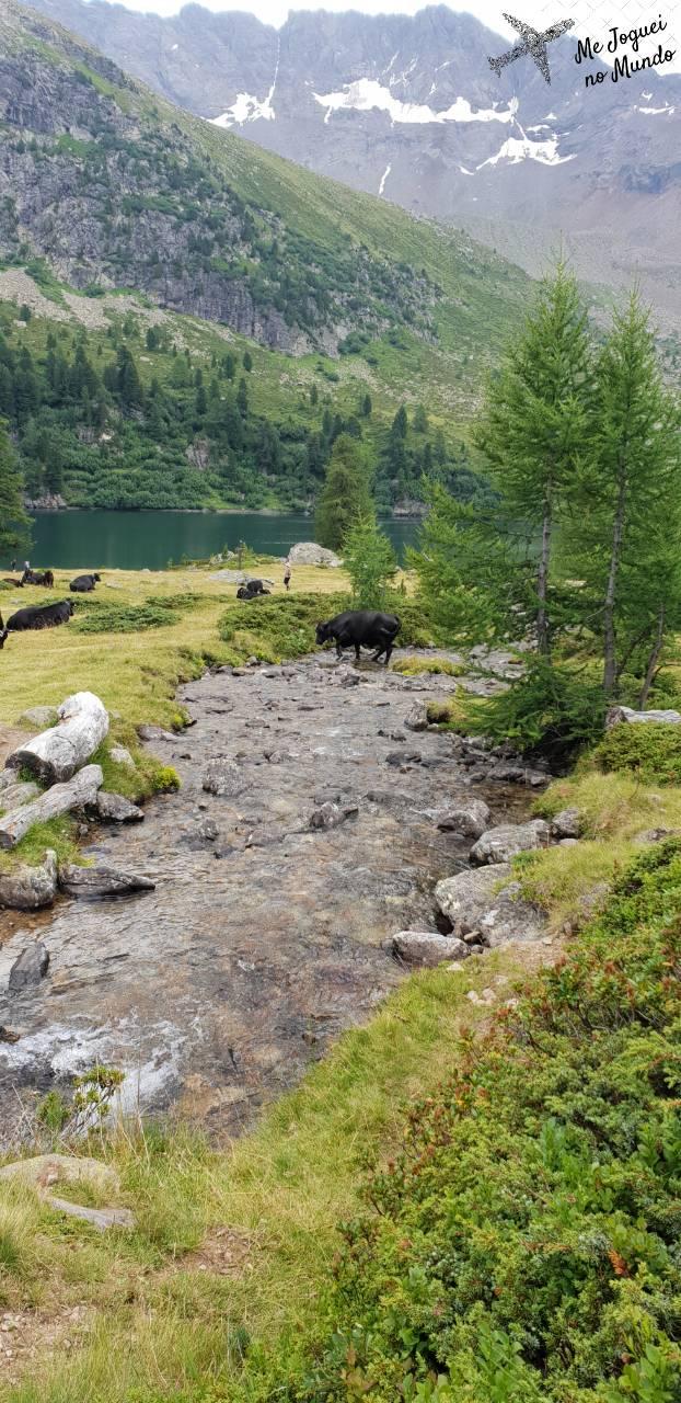 trilha lago saoseo e val viola